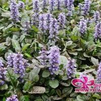 微小身材超能量8种花草植物的神奇护肤功效